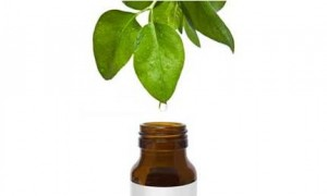 Tea Tree Oil Dråbe Billede