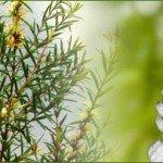 Tea Tree Oil mod forkølelsessår